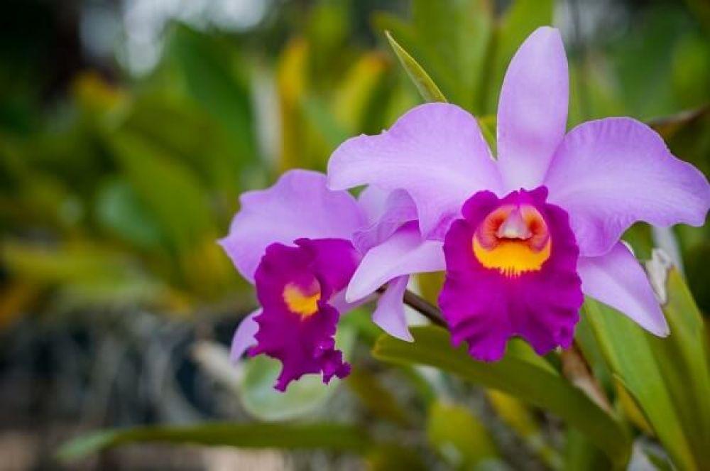 As orquídeas são ótimas para decorar ambientes internos. Fonte: GpaBrasil