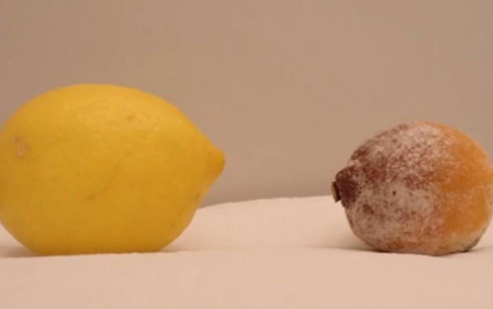 Foto de limões colhidos no mesmo dia, mostram a diferença da fruta que recebeu o produto — Foto: Reprodução/TV Anhanguera